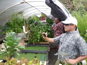 (Caption) Dr. Tetsuzan Benny Ron from UH Manoa captures data from a backyard aquaponics system to be integrated 