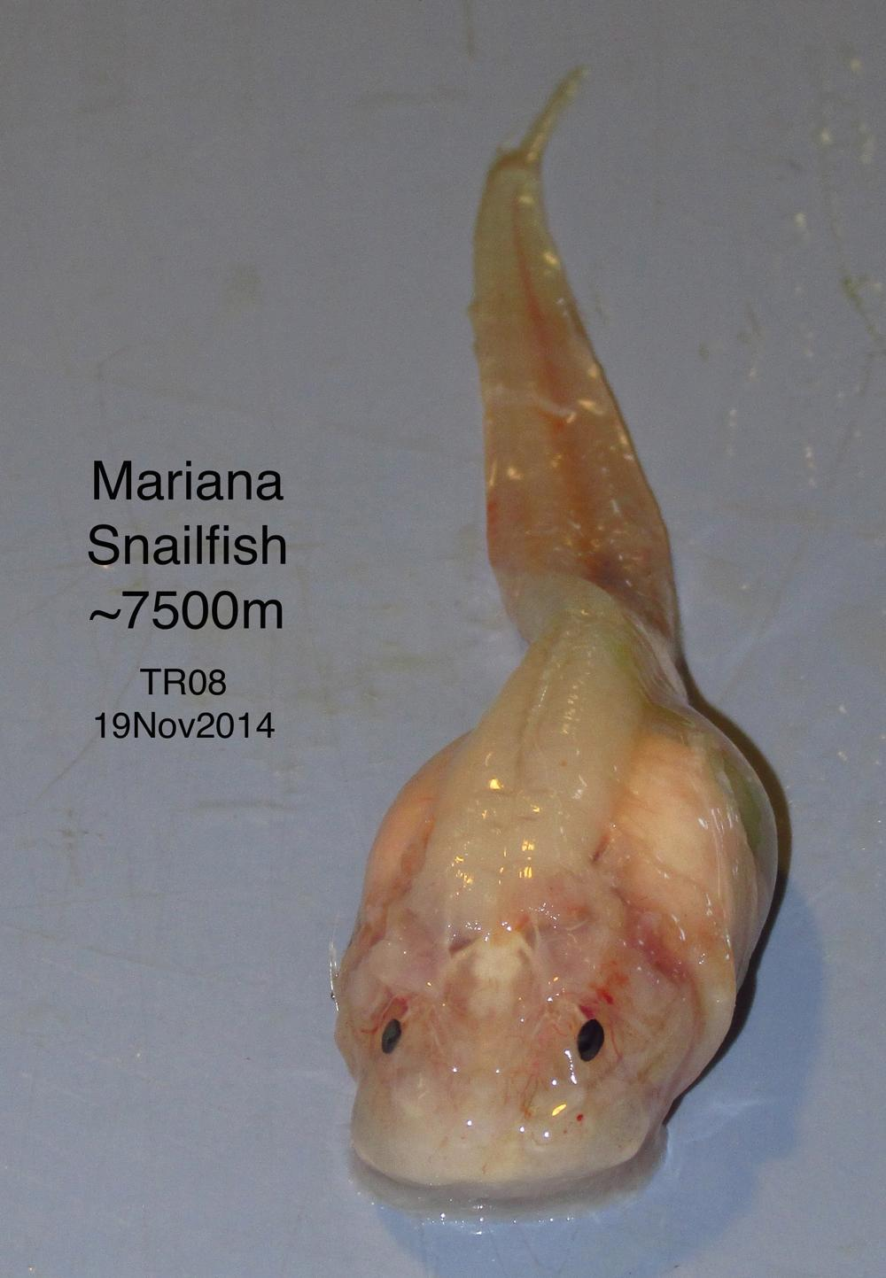 Mānoa New Species And Surprising Findings In The Mariana